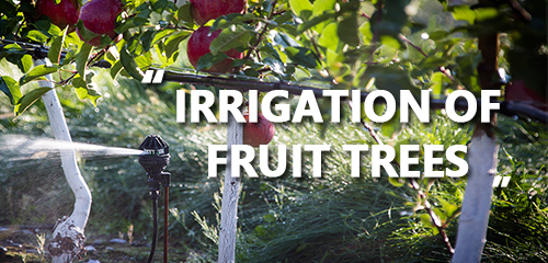How to use water soluble fertilizer for fruit trees?