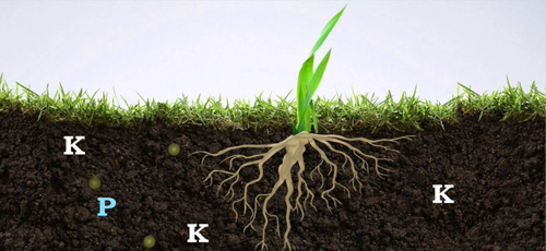 The reaction of applying potassium sulfate in different soils and the matters needing attention: