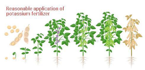 Reasonable application of potassium fertilizer