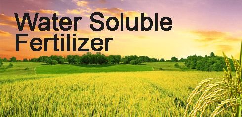Adventure of Water Soluble Fertilizer
