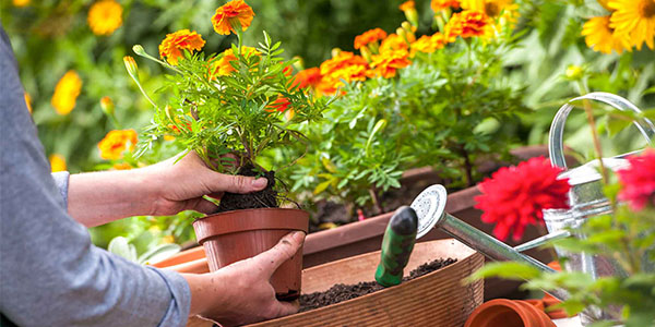 Can I use potassium sulfate compound fertilizer for growing flowers?