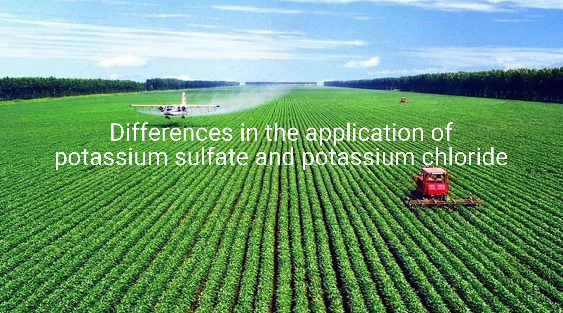 Differences in the application of potassium sulfate and potassium chloride
