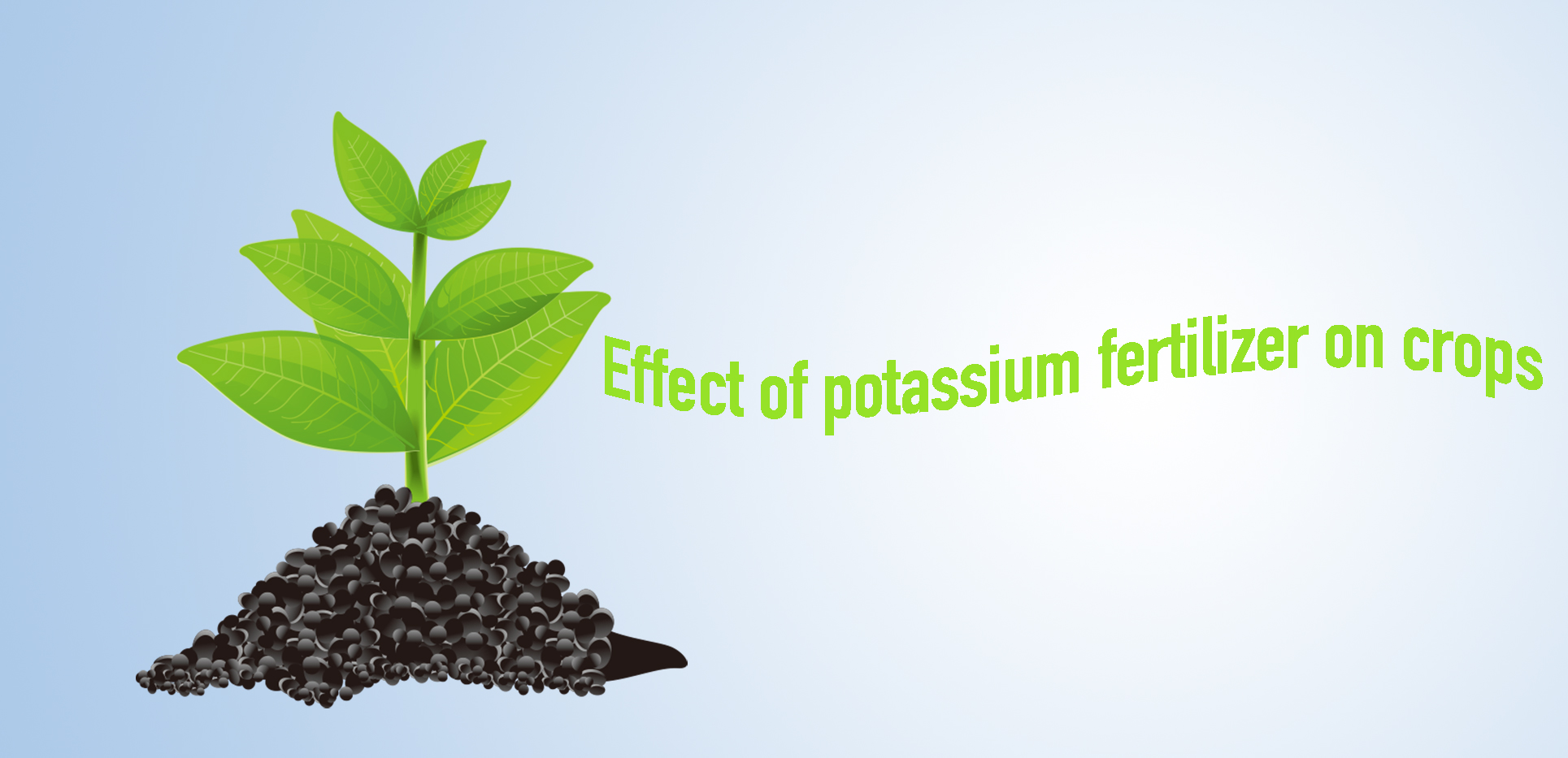 Effect of potassium fertilizer on crops