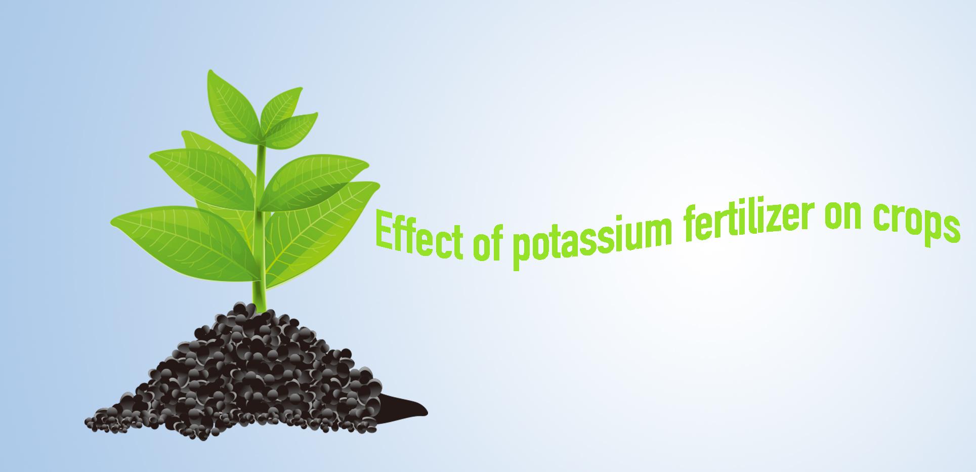 Effect of potassium fertilizer on crops