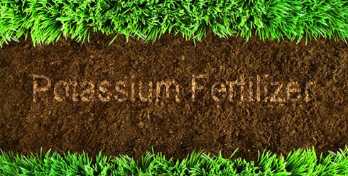 Factors affecting the use of potassium fertilizer